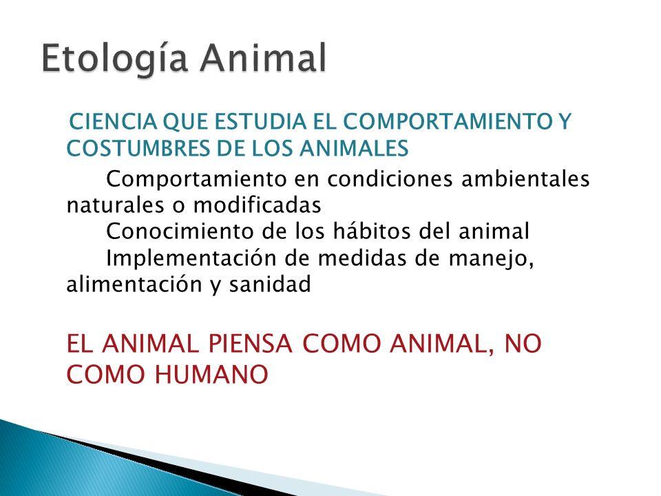 CIENCIA QUE ESTUDIA EL COMPORTAMIENTO Y COSTUMBRES DE LOS ANIMALES Comportamiento en condiciones ambientales naturales o modificadas Conocimiento de los hábitos del animal Implementación de medidas de manejo, alimentación y sanidad EL ANIMAL PIENSA COMO ANIMAL, NO COMO HUMANO