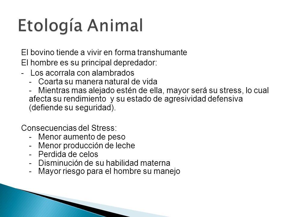 El bovino tiende a vivir en forma transhumante El hombre es su principal depredador: - Los acorrala con alambrados - Coarta su manera natural de vida