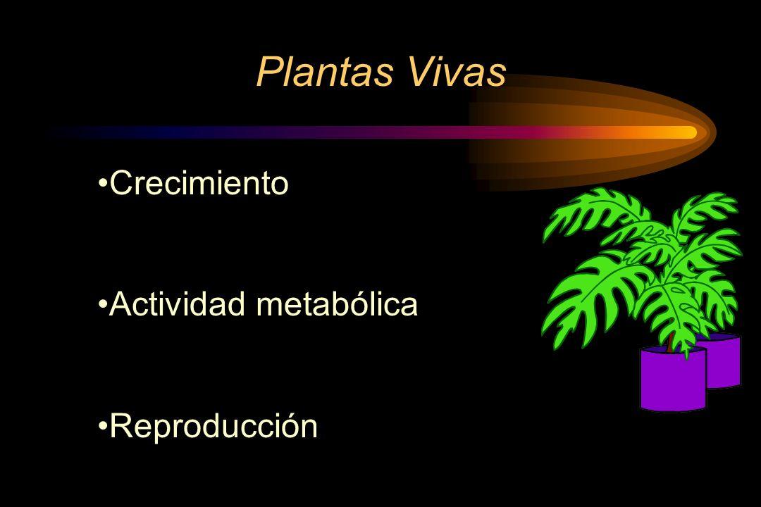 Crecimiento Intermedio Ejemplos: el tallo, las raíces.