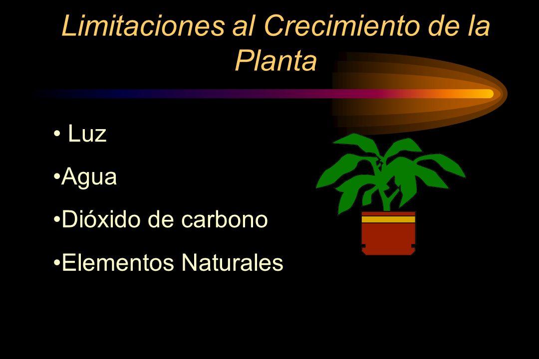 Deficiencia de Azufre Las hojas son cloróticas en toda la planta.