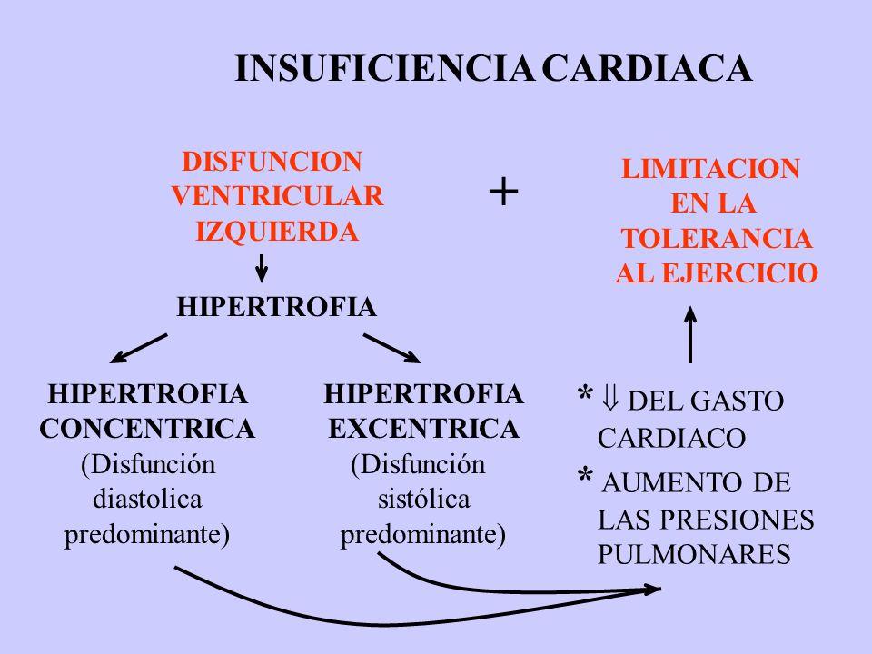 HIPERTROFIA CONCENTRICA (Disfunción diastolica predominante) HIPERTROFIA EXCENTRICA (Disfunción sistólica predominante) DISFUNCION VENTRICULAR IZQUIER