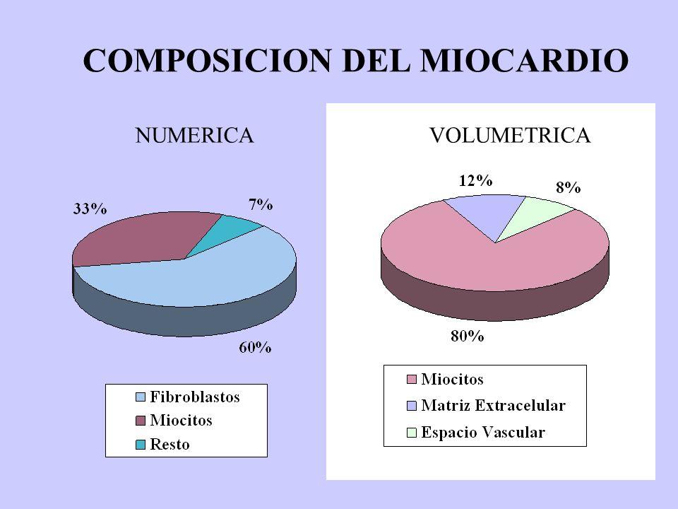 COMPOSICION DEL MIOCARDIO NUMERICA VOLUMETRICA