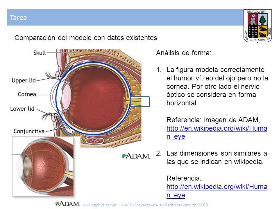 Tarea www.gphysics.net – UACH-Proyecto-en-la-Medicina-Versión 06.09 Comparación del modelo con datos existentes Análisis de forma: 1.La figura modela