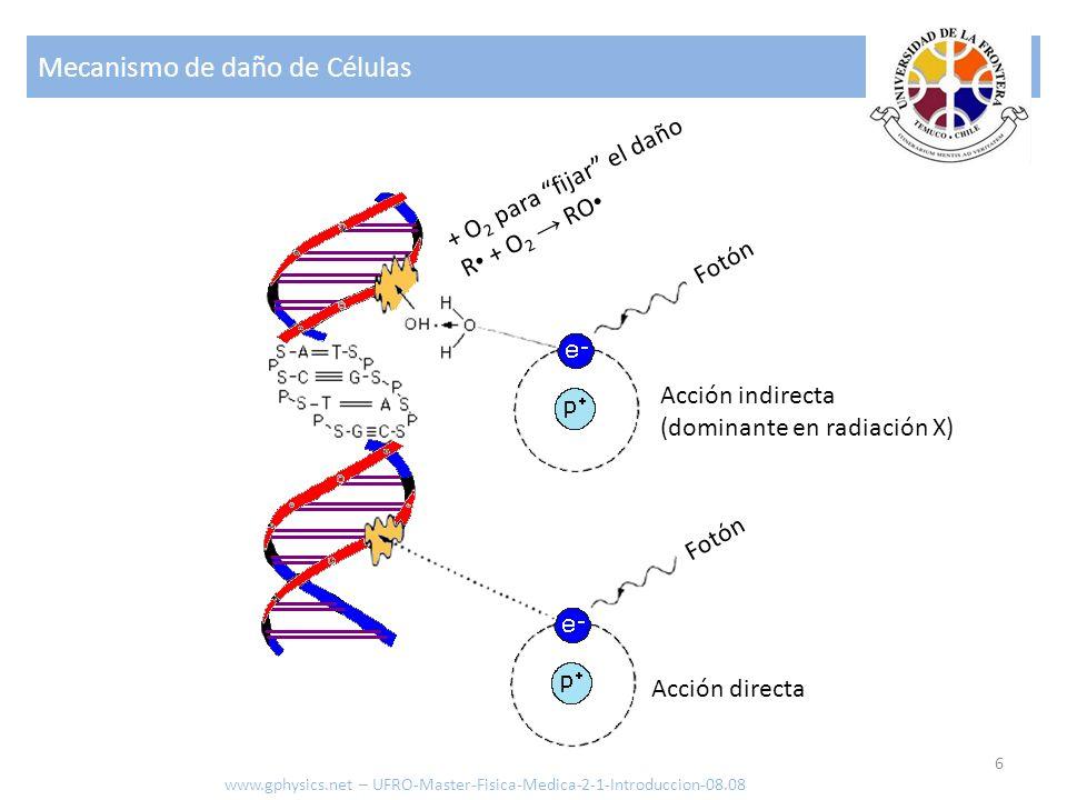 Mecanismo de daño de Células 6 + O 2 para fijar el daño R + O 2 RO Fotón Acción directa Acción indirecta (dominante en radiación X) www.gphysics.net – UFRO-Master-Fisica-Medica-2-1-Introduccion-08.08