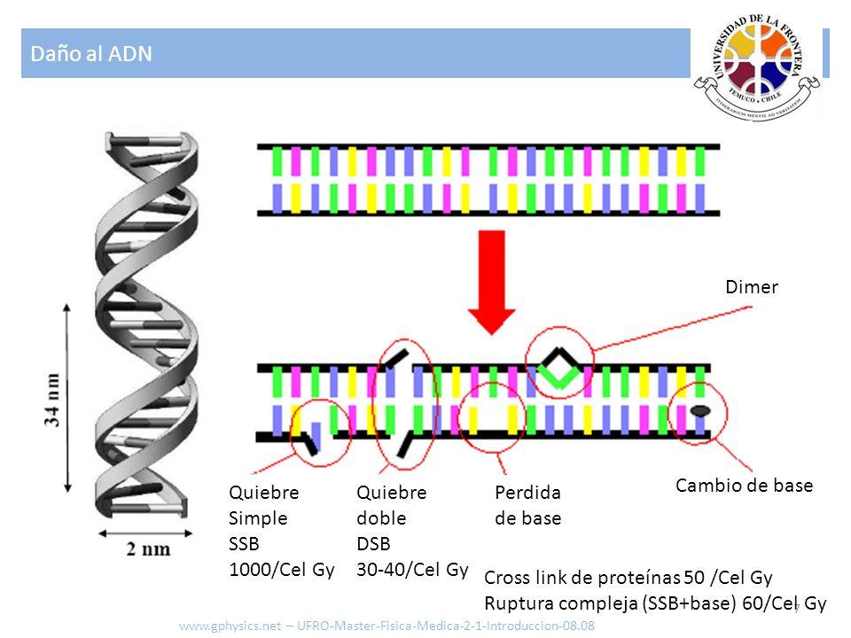 Daño al ADN 7 www.gphysics.net – UFRO-Master-Fisica-Medica-2-1-Introduccion-08.08 Cambio de base Perdida de base Dimer Quiebre doble DSB 30-40/Cel Gy Quiebre Simple SSB 1000/Cel Gy Cross link de proteínas 50 /Cel Gy Ruptura compleja (SSB+base) 60/Cel Gy