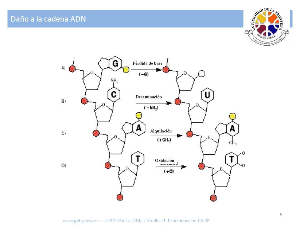 Daño a la cadena ADN 5 www.gphysics.net – UFRO-Master-Fisica-Medica-1-1-Introduccion-08.08
