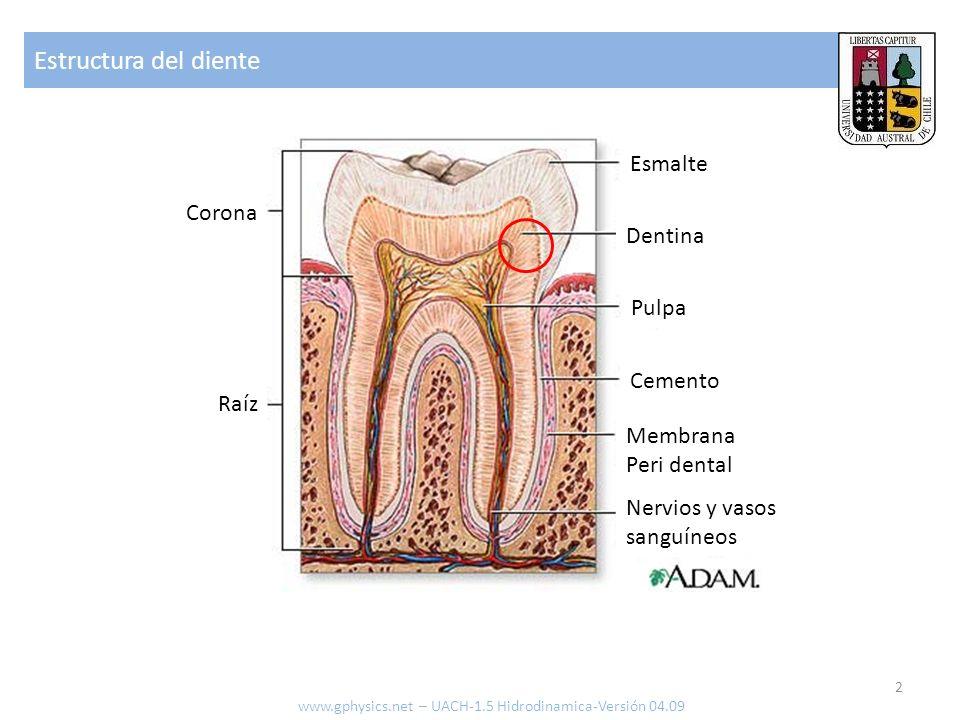 Estructura del diente 2 www.gphysics.net – UACH-1.5 Hidrodinamica-Versión 04.09 Dentina Esmalte Nervios y vasos sanguíneos Membrana Peri dental Cemento Pulpa Raíz Corona