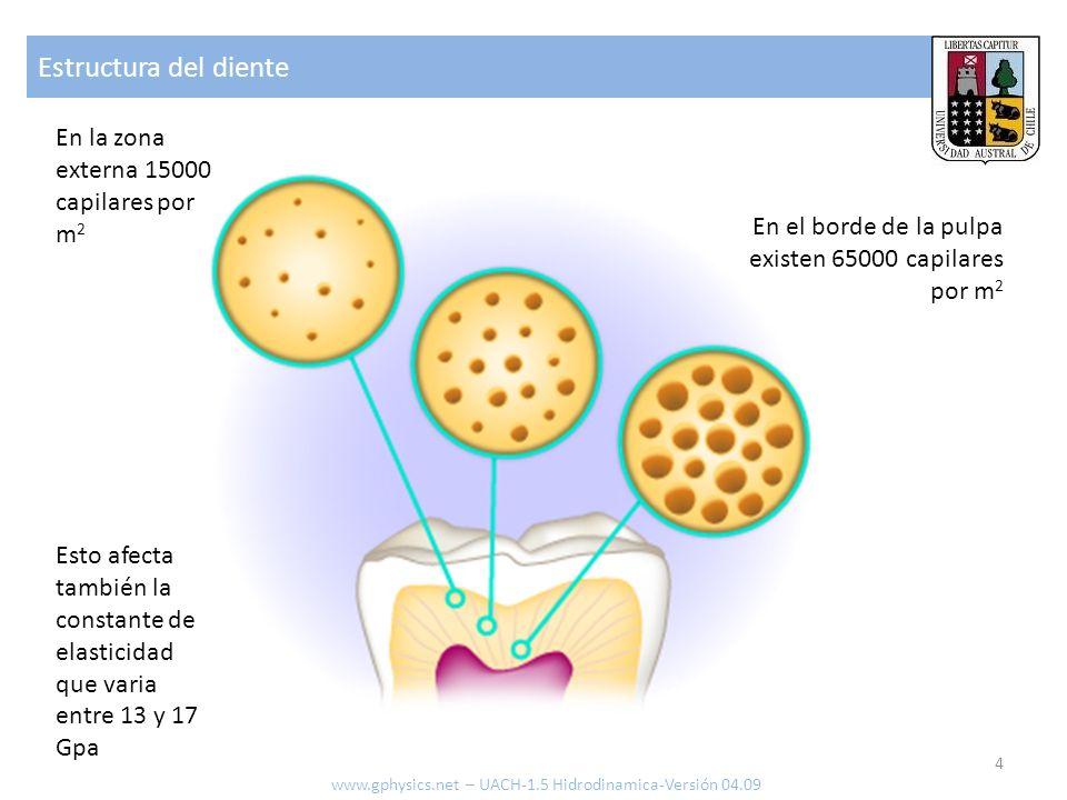 Estructura del diente 4 www.gphysics.net – UACH-1.5 Hidrodinamica-Versión 04.09 En el borde de la pulpa existen 65000 capilares por m 2 En la zona externa 15000 capilares por m 2 Esto afecta también la constante de elasticidad que varia entre 13 y 17 Gpa