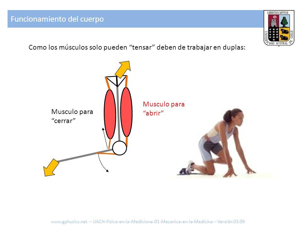 Funcionamiento del cuerpo Como los músculos solo pueden tensar deben de trabajar en duplas: Musculo para abrir Musculo para cerrar www.gphysics.net –