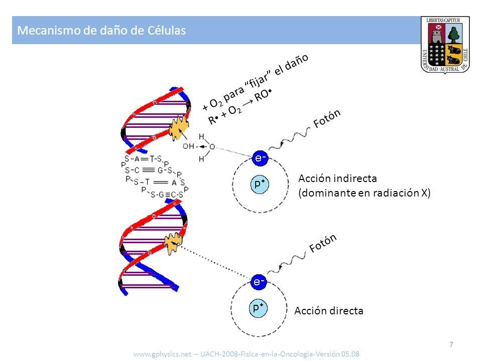 Mecanismo de daño de Células 7 www.gphysics.net – UACH-2008-Fisica-en-la-Oncologia-Versión 05.08 + O 2 para fijar el daño R + O 2 RO Fotón Acción dire
