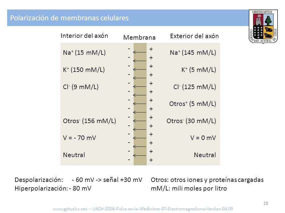 Polarización de membranas celulares www.gphysics.net – UACH-2008-Fisica-en-la-Mediciona-07-Electromagnetismo-Version-04.09 19 Na + (15 mM/L) K + (150