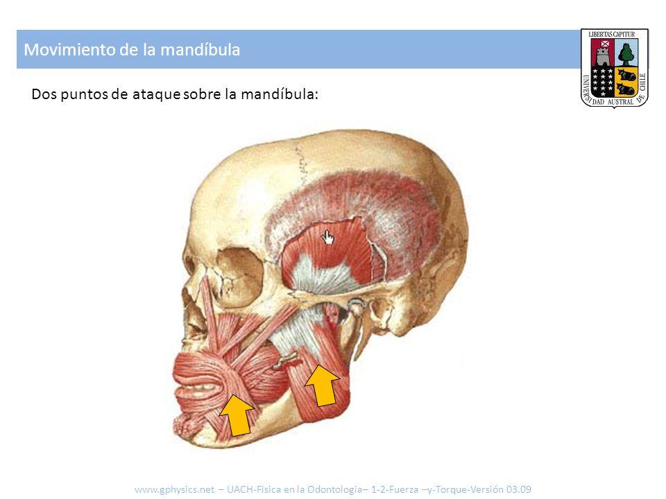 Movimiento de la mandíbula Dos puntos de ataque sobre la mandíbula: www.gphysics.net – UACH-Fisica en la Odontologia– 1-2-Fuerza –y-Torque-Versión 03.