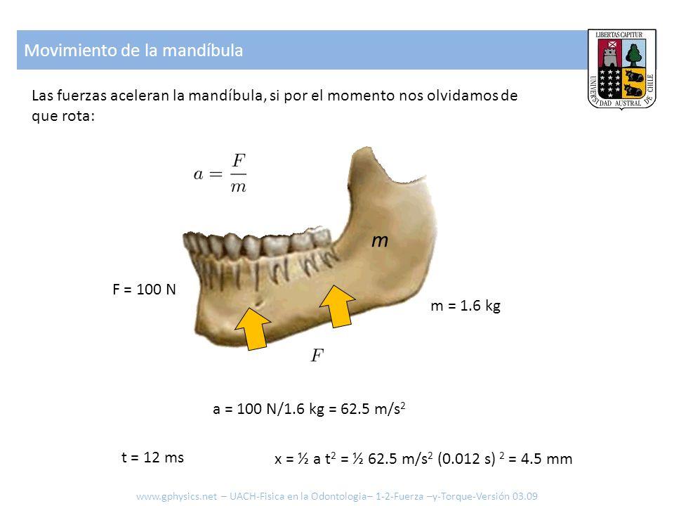 Movimiento de la mandíbula Las fuerzas aceleran la mandíbula, si por el momento nos olvidamos de que rota: m m = 1.6 kg F = 100 N a = 100 N/1.6 kg = 6