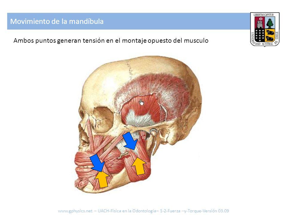 Movimiento de la mandíbula Ambos puntos generan tensión en el montaje opuesto del musculo www.gphysics.net – UACH-Fisica en la Odontologia– 1-2-Fuerza