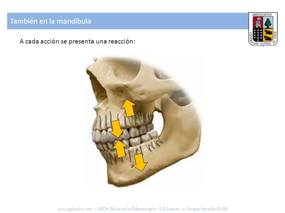 También en la mandíbula A cada acción se presenta una reacción: www.gphysics.net – UACH-Fisica en la Odontologia– 1-2-Fuerza –y-Torque-Versión 03.09