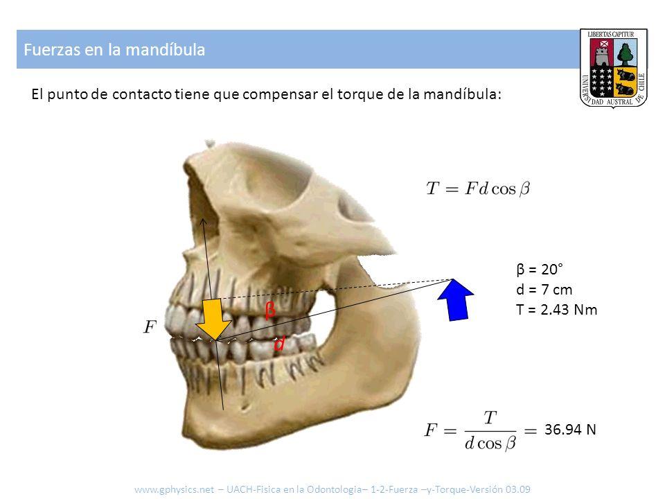 Fuerzas en la mandíbula El punto de contacto tiene que compensar el torque de la mandíbula: β d β = 20° d = 7 cm T = 2.43 Nm 36.94 N www.gphysics.net
