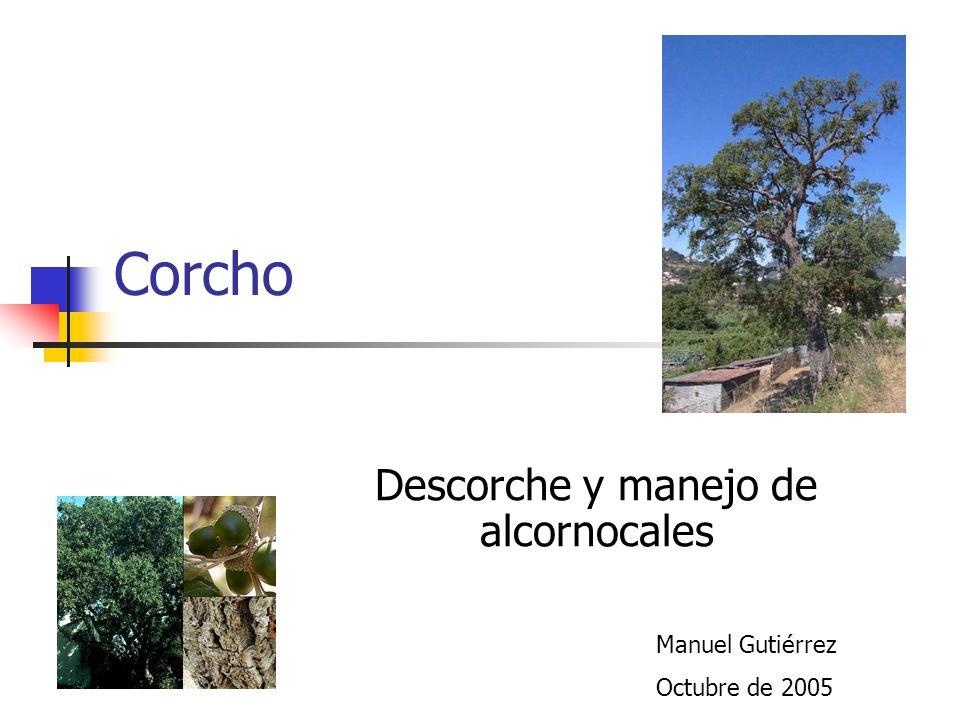Corcho Descorche y manejo de alcornocales Manuel Gutiérrez Octubre de 2005