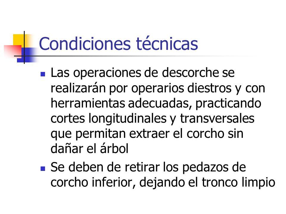 Condiciones técnicas Las operaciones de descorche se realizarán por operarios diestros y con herramientas adecuadas, practicando cortes longitudinales