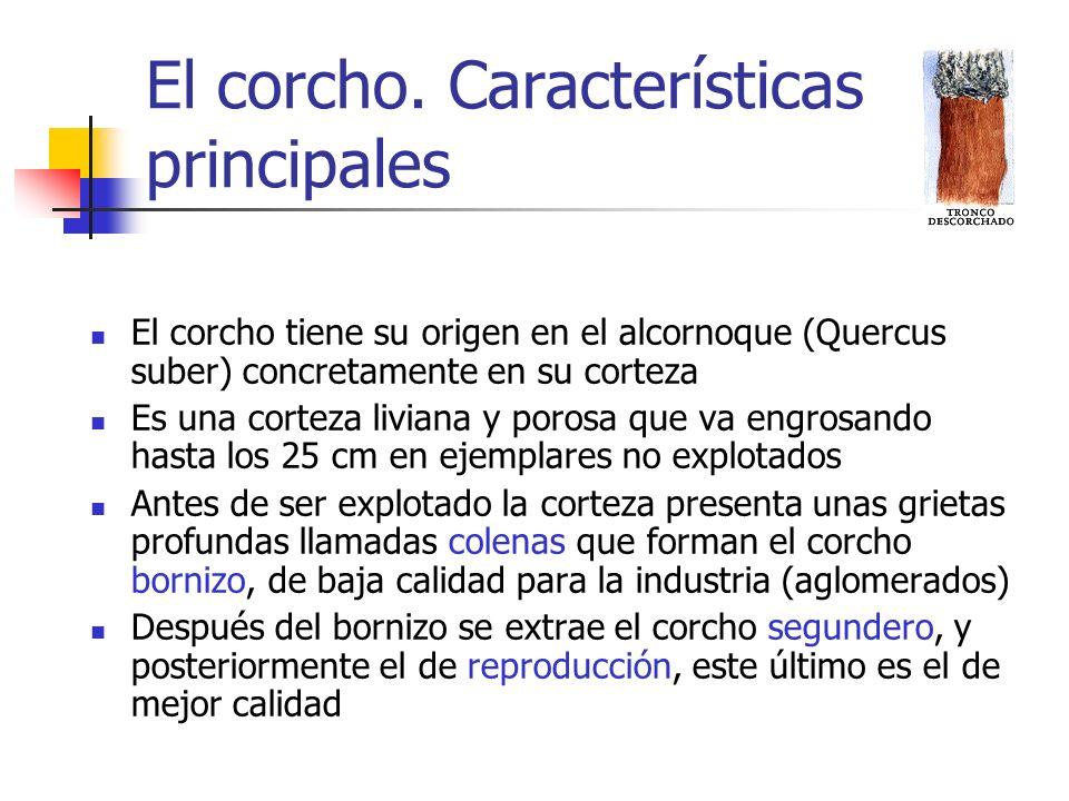 El corcho. Características principales El corcho tiene su origen en el alcornoque (Quercus suber) concretamente en su corteza Es una corteza liviana y
