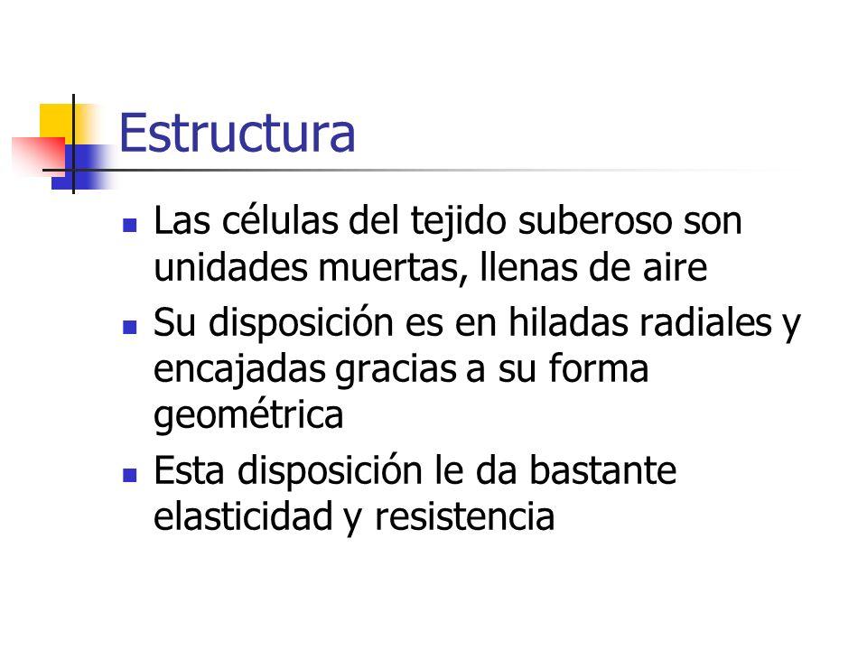 Estructura Las células del tejido suberoso son unidades muertas, llenas de aire Su disposición es en hiladas radiales y encajadas gracias a su forma g