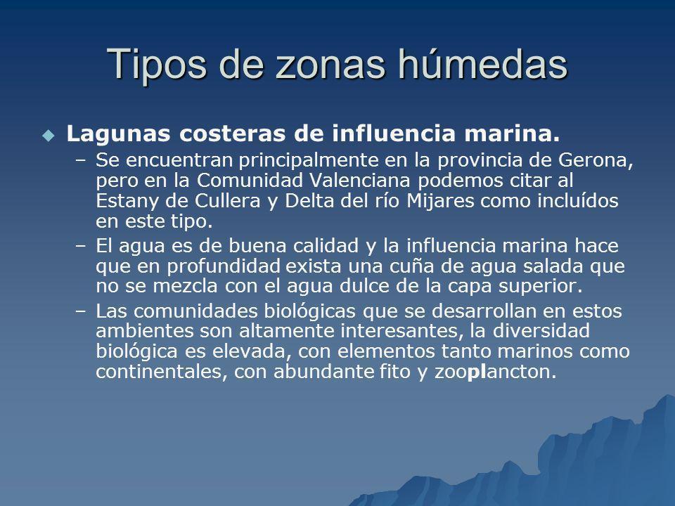 Tipos de zonas húmedas Lagunas costeras de influencia marina. – –Se encuentran principalmente en la provincia de Gerona, pero en la Comunidad Valencia