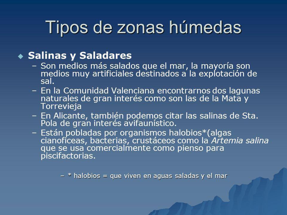 Tipos de zonas húmedas Salinas y Saladares – –Son medios más salados que el mar, la mayoría son medios muy artificiales destinados a la explotación de