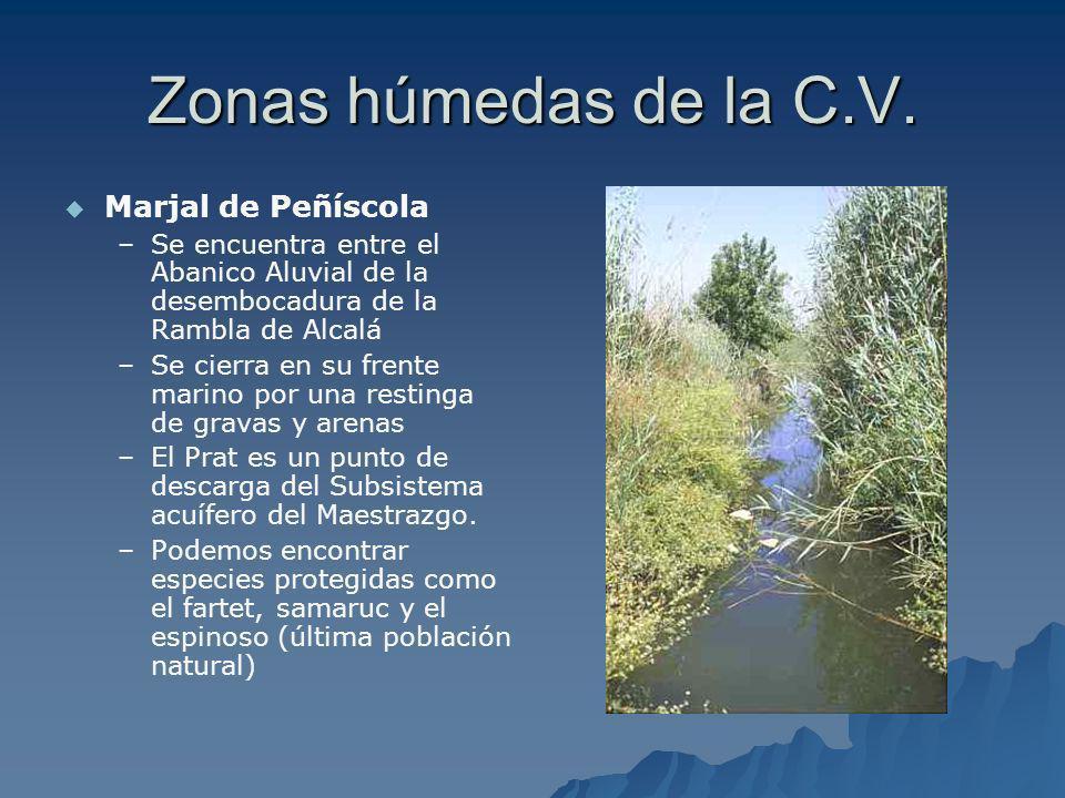 Zonas húmedas de la C.V. Marjal de Peñíscola – –Se encuentra entre el Abanico Aluvial de la desembocadura de la Rambla de Alcalá – –Se cierra en su fr