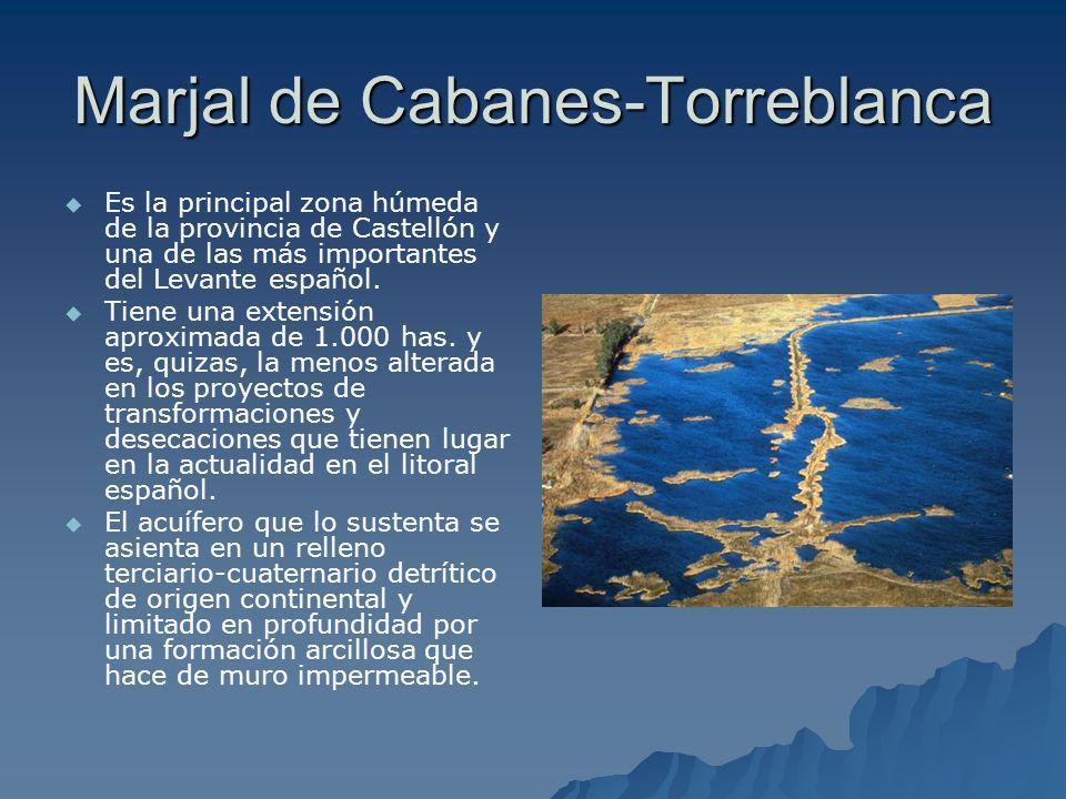 Marjal de Cabanes-Torreblanca Es la principal zona húmeda de la provincia de Castellón y una de las más importantes del Levante español. Tiene una ext