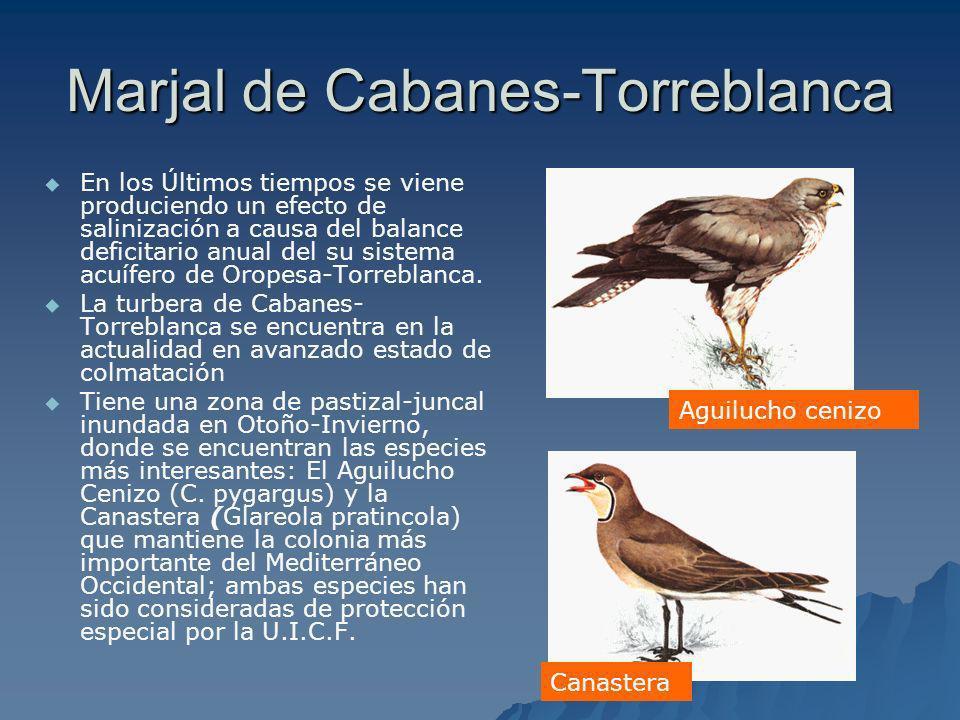 Marjal de Cabanes-Torreblanca En los Últimos tiempos se viene produciendo un efecto de salinización a causa del balance deficitario anual del su siste