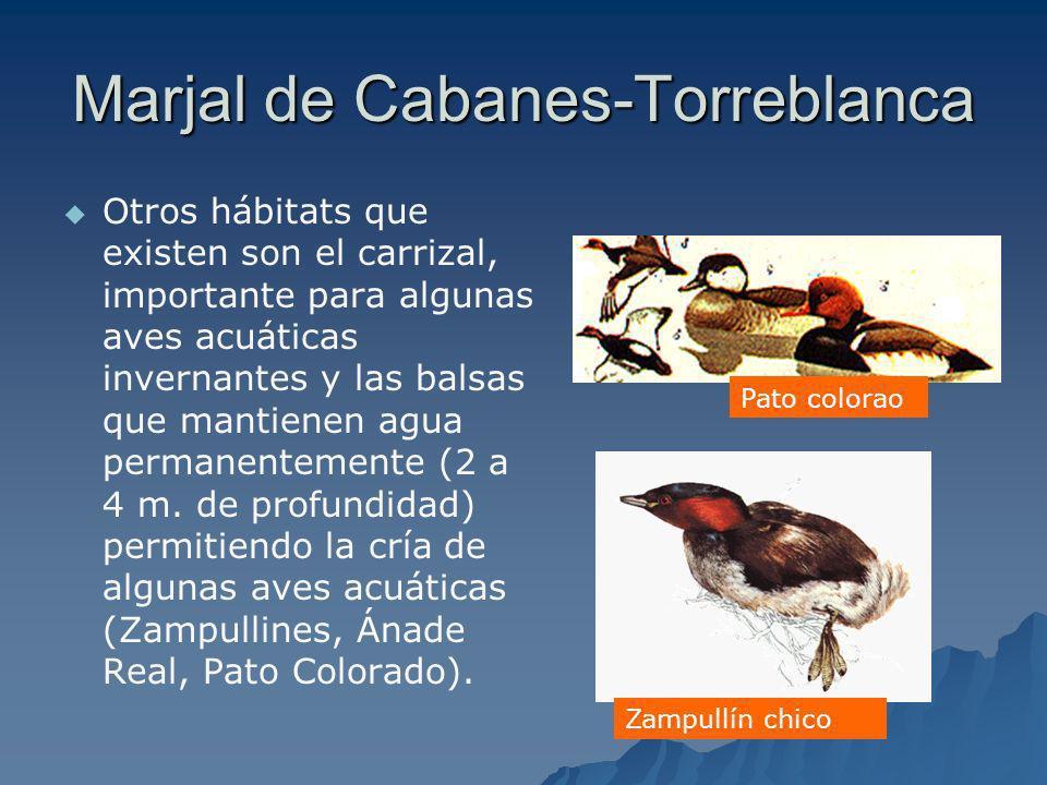 Marjal de Cabanes-Torreblanca Otros hábitats que existen son el carrizal, importante para algunas aves acuáticas invernantes y las balsas que mantiene