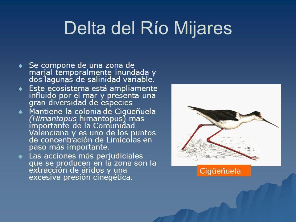 Delta del Río Mijares Se compone de una zona de marjal temporalmente inundada y dos lagunas de salinidad variable. Este ecosistema está ampliamente in