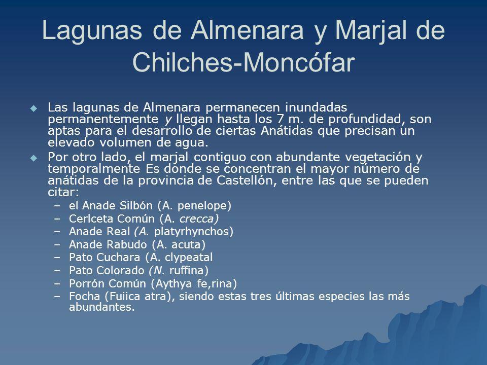 Lagunas de Almenara y Marjal de Chilches-Moncófar Las lagunas de Almenara permanecen inundadas permanentemente y llegan hasta los 7 m. de profundidad,