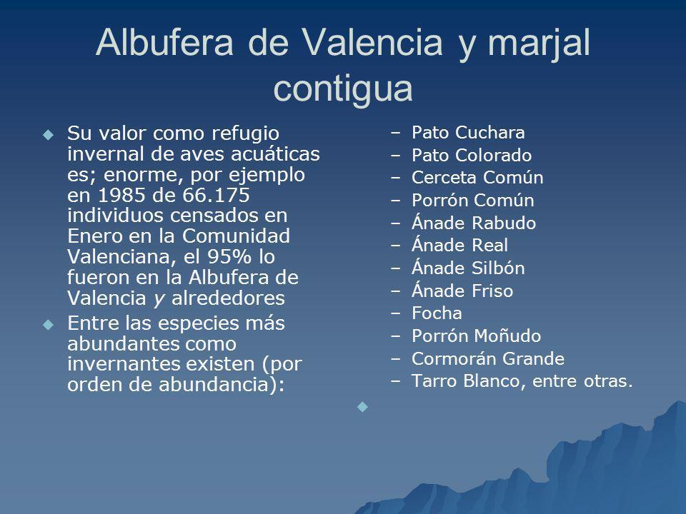 Albufera de Valencia y marjal contigua Su valor como refugio invernal de aves acuáticas es; enorme, por ejemplo en 1985 de 66.175 individuos censados