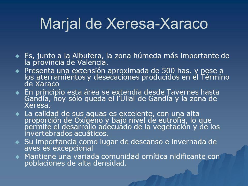 Marjal de Xeresa-Xaraco Es, junto a la Albufera, la zona húmeda más importante de la provincia de Valencia. Presenta una extensión aproximada de 500 h