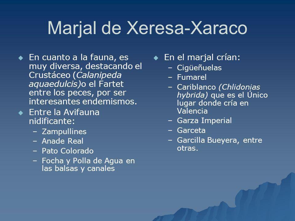 Marjal de Xeresa-Xaraco En cuanto a la fauna, es muy diversa, destacando el Crustáceo (Calanipeda aquaedulcis)o el Fartet entre los peces, por ser int