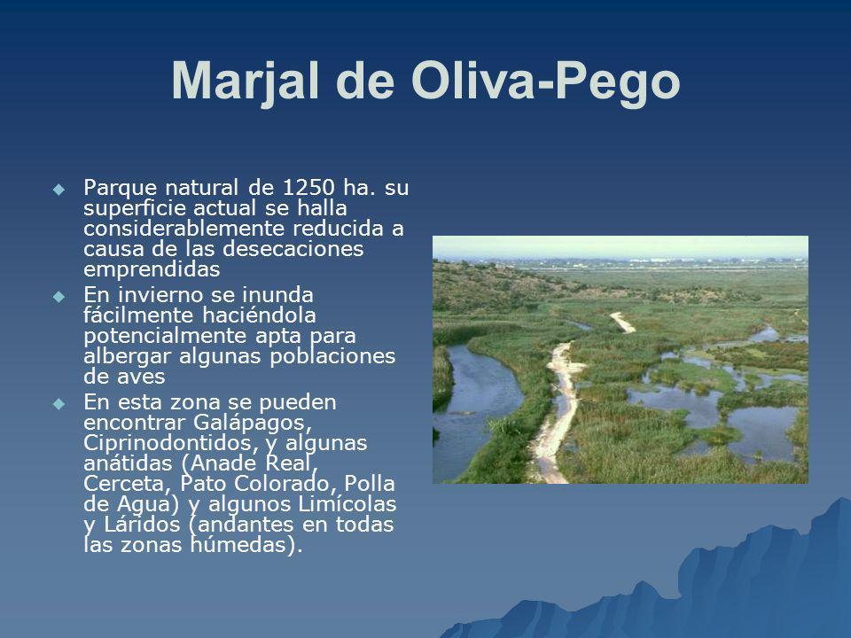 Marjal de Oliva-Pego Parque natural de 1250 ha. su superficie actual se halla considerablemente reducida a causa de las desecaciones emprendidas En in