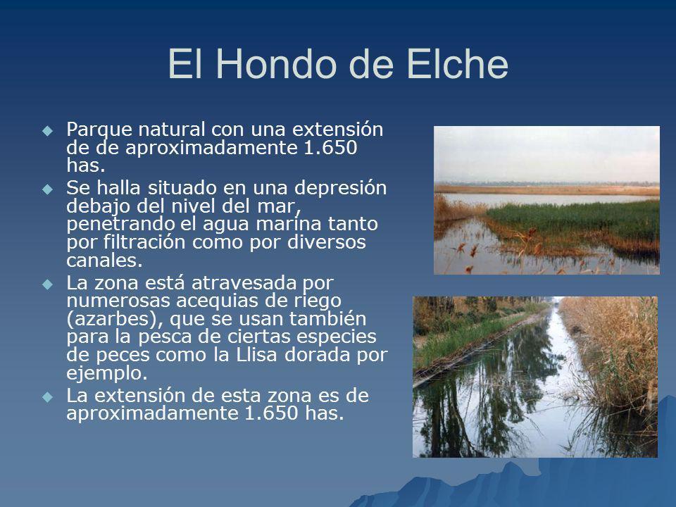 El Hondo de Elche Parque natural con una extensión de de aproximadamente 1.650 has. Se halla situado en una depresión debajo del nivel del mar, penetr