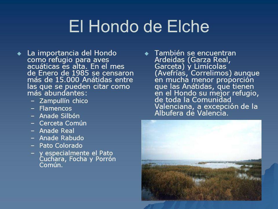 El Hondo de Elche La importancia del Hondo como refugio para aves acuáticas es alta. En el mes de Enero de 1985 se censaron más de 15.000 Anátidas ent