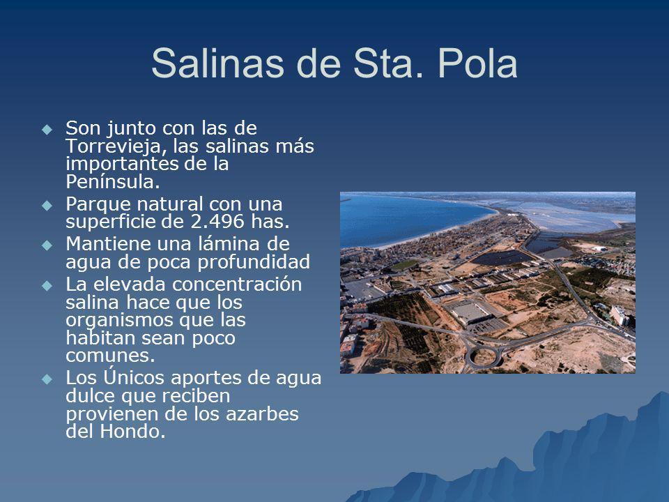 Salinas de Sta. Pola Son junto con las de Torrevieja, las salinas más importantes de la Península. Parque natural con una superficie de 2.496 has. Man
