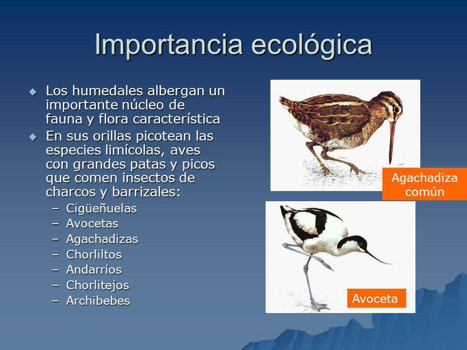 Importancia ecológica Los humedales albergan un importante núcleo de fauna y flora característica Los humedales albergan un importante núcleo de fauna