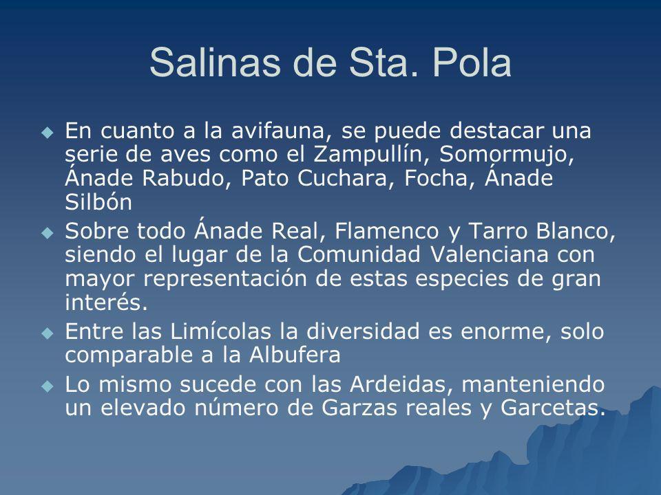 Salinas de Sta. Pola En cuanto a la avifauna, se puede destacar una serie de aves como el Zampullín, Somormujo, Ánade Rabudo, Pato Cuchara, Focha, Ána