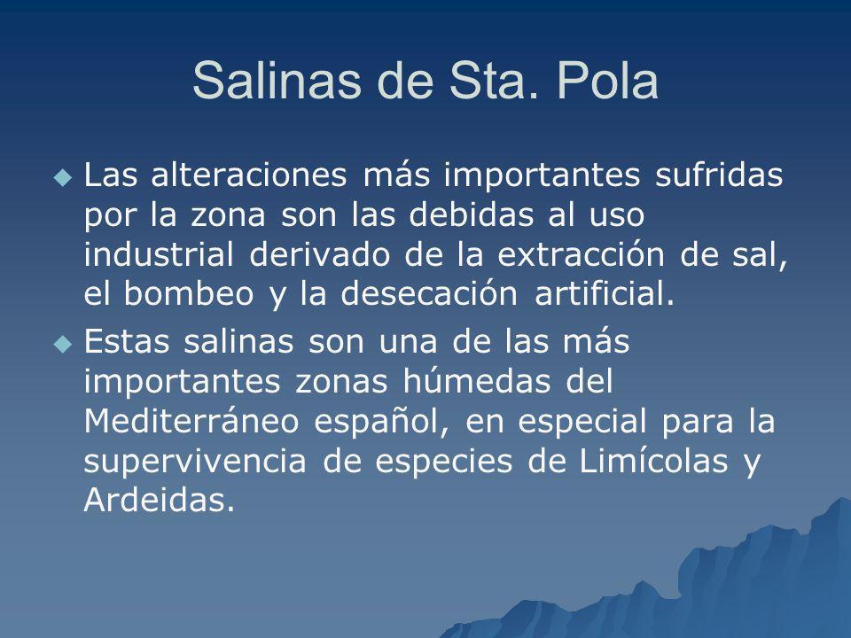 Salinas de Sta. Pola Las alteraciones más importantes sufridas por la zona son las debidas al uso industrial derivado de la extracción de sal, el bomb