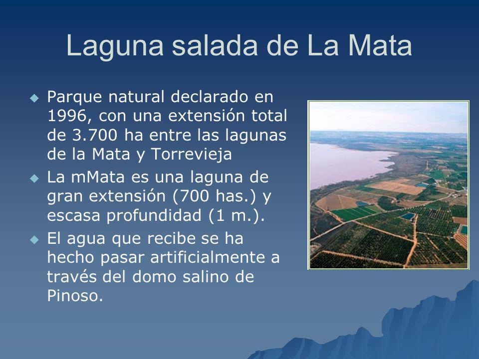 Laguna salada de La Mata Parque natural declarado en 1996, con una extensión total de 3.700 ha entre las lagunas de la Mata y Torrevieja La mMata es u