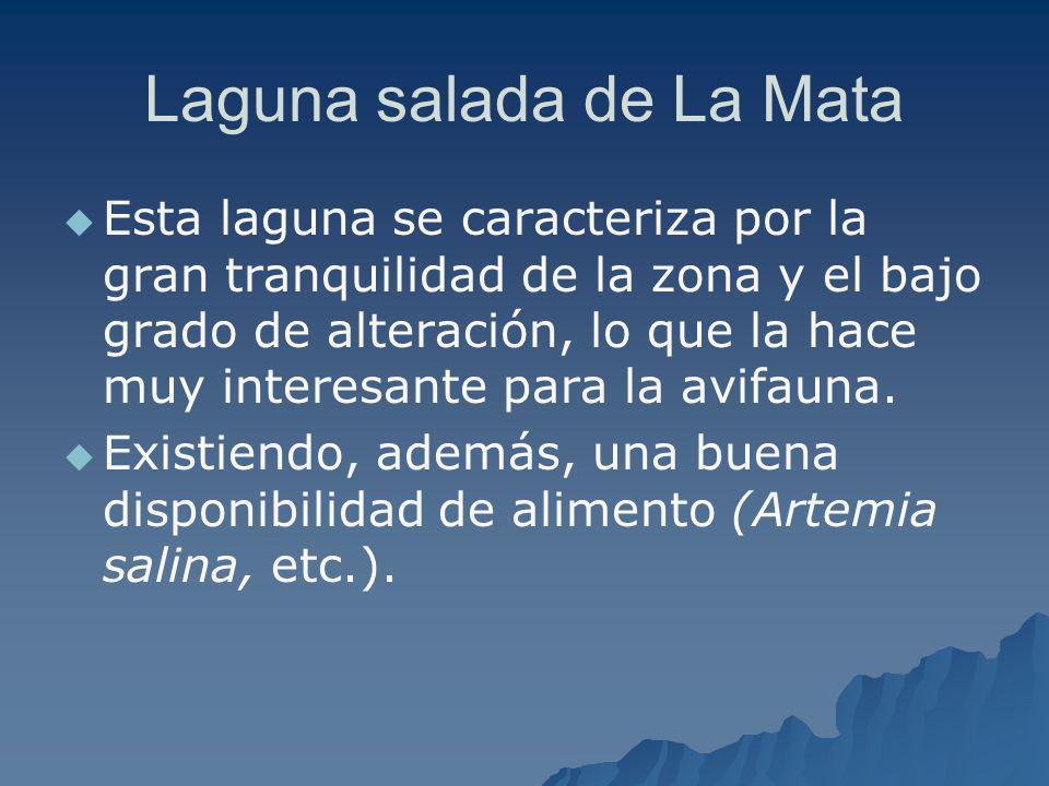 Laguna salada de La Mata Esta laguna se caracteriza por la gran tranquilidad de la zona y el bajo grado de alteración, lo que la hace muy interesante