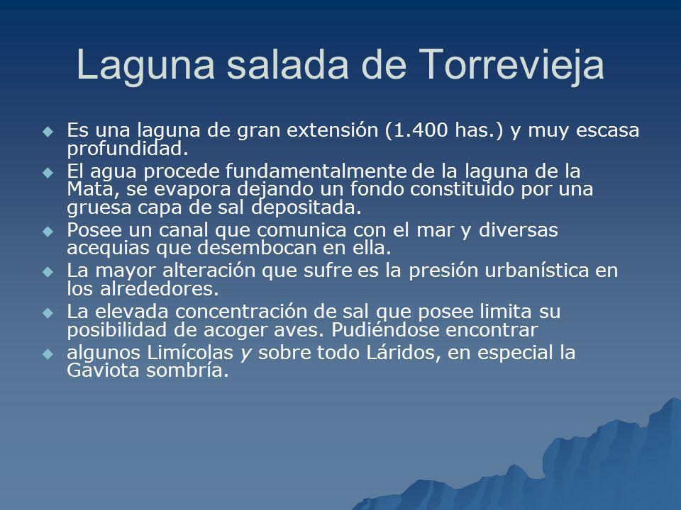 Laguna salada de Torrevieja Es una laguna de gran extensión (1.400 has.) y muy escasa profundidad. El agua procede fundamentalmente de la laguna de la