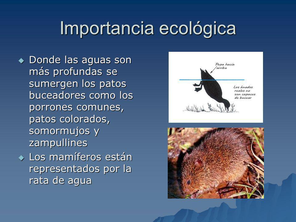 Marjal de Cabanes-Torreblanca Otros hábitats que existen son el carrizal, importante para algunas aves acuáticas invernantes y las balsas que mantienen agua permanentemente (2 a 4 m.