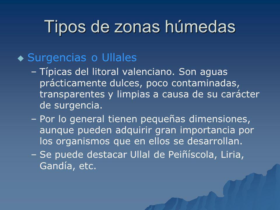 LAGUNAS Y HUMEDALES DE INTERIOR 31 DEHESA DE SONEJA 31 DEHESA DE SONEJA DEHESA DE SONEJADEHESA DE SONEJA 32 LAGUNAS DE SEGORBE 32 LAGUNAS DE SEGORBE AGUNAS DE SEGORBEAGUNAS DE SEGORBE 33 LAVAJOS DE SINARCAS 33 LAVAJOS DE SINARCASLAVAJOS DE SINARCASLAVAJOS DE SINARCAS 34 LAGUNA DE SAN BENITO 34 LAGUNA DE SAN BENITO LAGUNA DE SAN BENITOLAGUNA DE SAN BENITO 35 LAGUNA Y SALEROS DE VILLENA 35 LAGUNA Y SALEROS DE VILLENA LAGUNA Y SALEROS DE VILLENALAGUNA Y SALEROS DE VILLENA 36 LAGUNA DE SALINAS 36 LAGUNA DE SALINASLAGUNA DE SALINASLAGUNA DE SALINAS