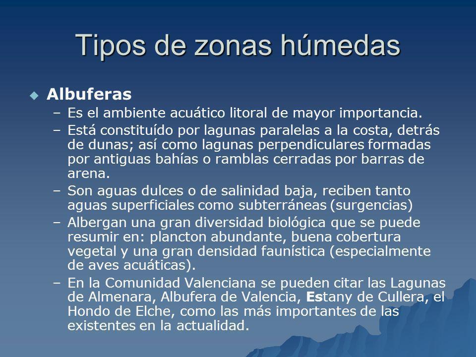 Tipos de zonas húmedas Albuferas – –Es el ambiente acuático litoral de mayor importancia. – –Está constituído por lagunas paralelas a la costa, detrás