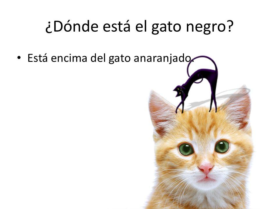 ¿Dónde está el gato negro