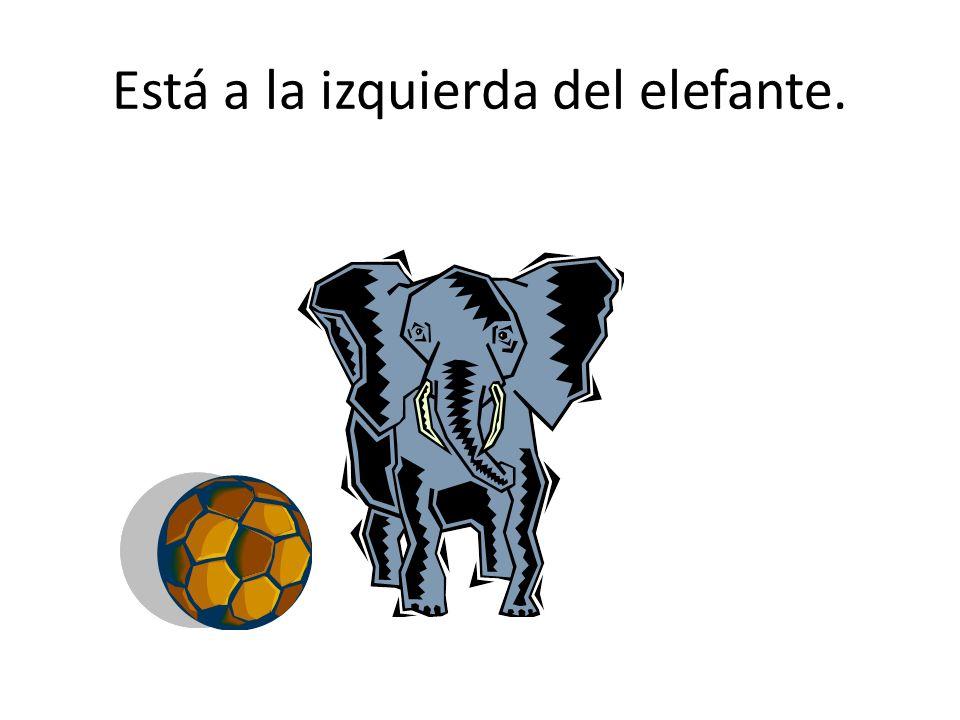 Está detrás del elefante.